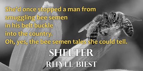 shelter-teaser-2